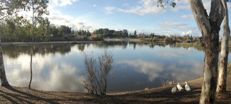 Almaden Lake Park offers a calm, quiet place to unwind in the winter months.