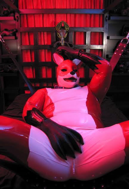 Smash, star of the human fox hunt. (Photo via Flickr)