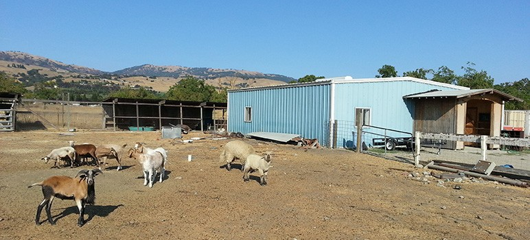 A congregation of South County Muslims who meet in an old barn want to build a permanent Islamic center in San Martin.