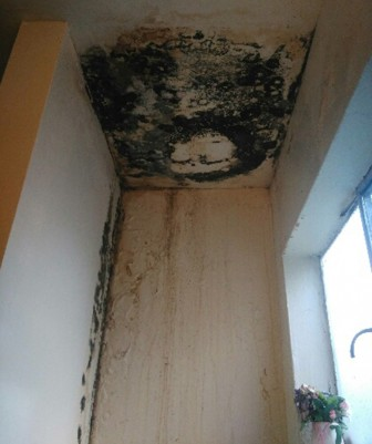 Mold in the bathroom two months after Katherine's initial mediation hearing. (Photo by Ly Huang)