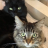 'Peak Silicon Valley': 2 Cats Live Alone in Their Own Apartment